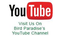 bird-paradise-utube