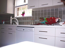 macaw on kitchen counter image