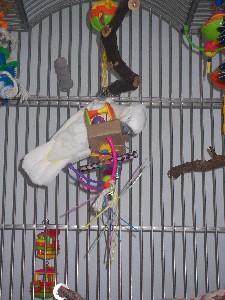 parrot-cage-perches