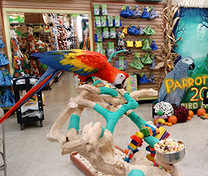 Exotic Bird Paradise - Pet Bird Supplies - birdparadise biz -